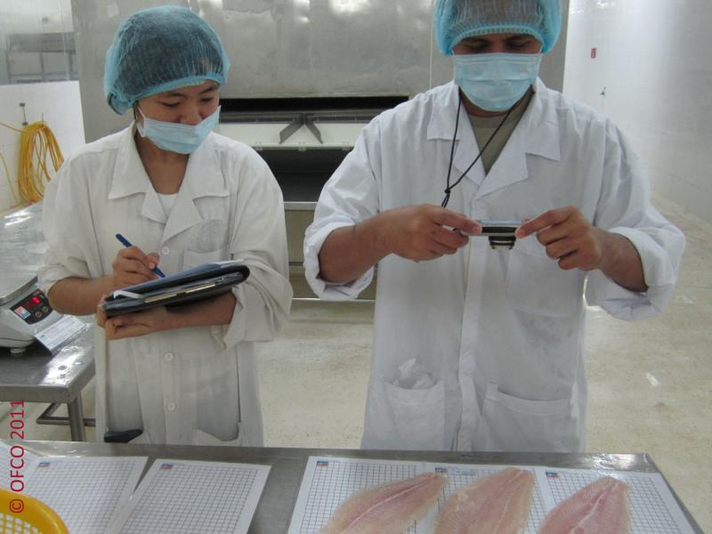 PANGASIUS, SHRIMP, BLACK TIGER, CLAMS, SQUID, OCTOPUS, TUNA, Seafood and Fish Quality Inspection OFCO