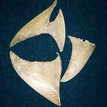 White Shark Fins And Sand Tiger Shark Teeth fORSALE