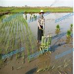 manual rice planter/ farm machinery rice transplanter/paddy transplanter price