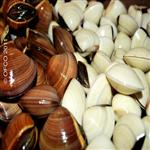 Clams (White and brown) shell On- Meretrix lyrata