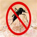 Fumigation For Mosquitoes