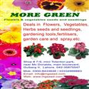 flower & vegetable seeds